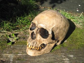 Full Skull