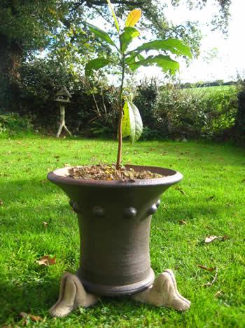 Knees Up Plant Pot Holder Dark