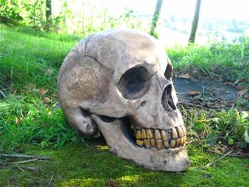 Giant Extra Large Skull Dark