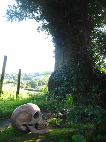 Giant Ornamental Skull Dark