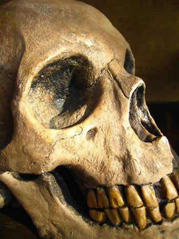 Giant Overnight Skull Dark
