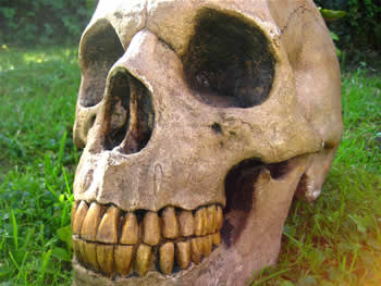 Giant Realistic Skull Dark