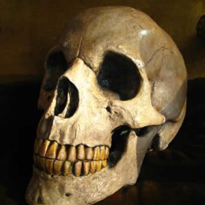 Giant Replica Skull Dark