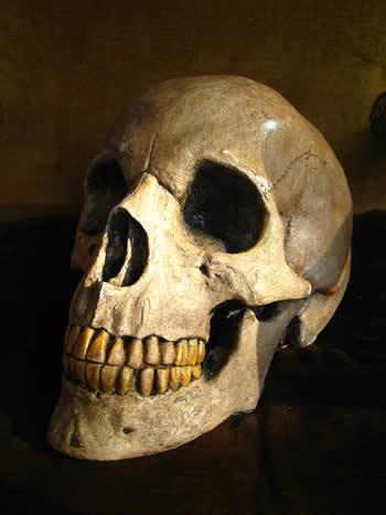 Giant Replica Skull Dark