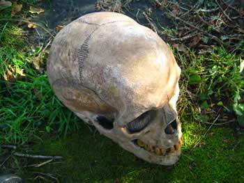 Giant Skull Ornament Dark