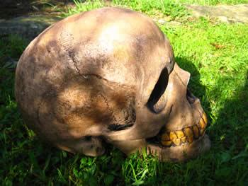 Giant Skull Reproduction Dark