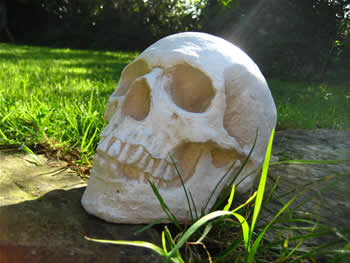 Lifesize Skull Pale Full