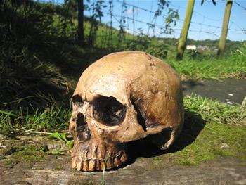 Skull No Jaw